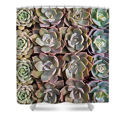 Rows Of Succulents  Shower Curtain by Catherine Lau