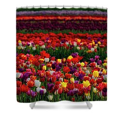 Shower Curtain featuring the photograph Rows Of Tulips by Susan Candelario