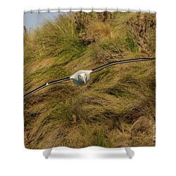 Royal Albatross 2 Shower Curtain by Werner Padarin