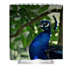 Royal Blue Shower Curtain