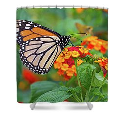 Royal Butterfly Shower Curtain by Shelley Neff