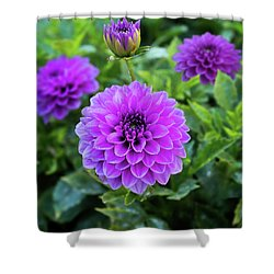 Royal Dahlia Delight Shower Curtain