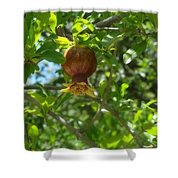 Royal Onion Pomegranate Shower Curtain