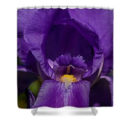 Gold With Royal Purple Robes Shower Curtain