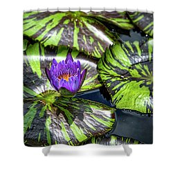 Royal Purple Shower Curtain by Dennis Baswell