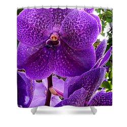 Royal Purple Orchids Shower Curtain