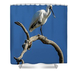 Royal Spoonbill 01 Shower Curtain