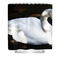 Royal Swan Shower Curtain