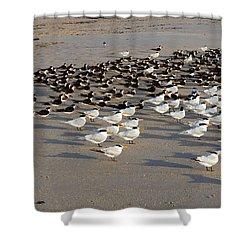 Royal Terns At Sebastian Inlet In Florida Shower Curtain by Allan  Hughes