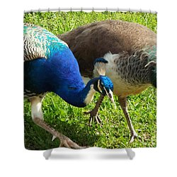 Royal Walk-about Shower Curtain by Audrey Van Tassell