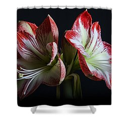 Royaldutch Shower Curtain by Doug Norkum