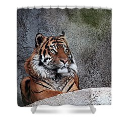 Royality Shower Curtain