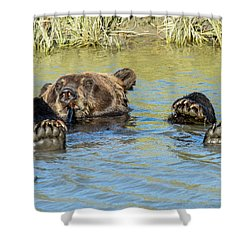 Rub A Dub Dub A Bear In His Tub Shower Curtain
