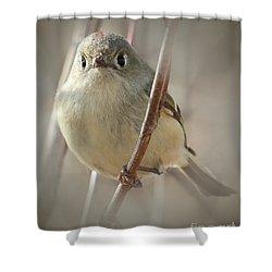 Ruby-crowned Cuteness Shower Curtain by Anita Oakley
