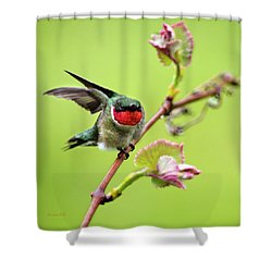 Shower Curtain featuring the photograph Ruby Garden Hummingbird by Christina Rollo