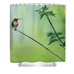 Ruby Red Perch Shower Curtain