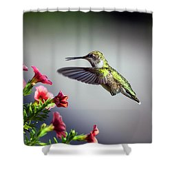 Ruby Throated Hummingbird #1 Shower Curtain