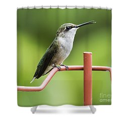 Shower Curtain featuring the photograph Ruby-throated Hummingbird by Ricky L Jones