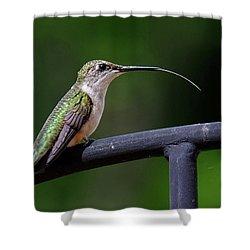 Ruby-throated Hummingbird Tongue Shower Curtain by Ronda Ryan