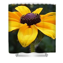Rudbeckia Bloom Up Close Shower Curtain