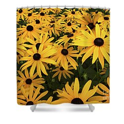 Rudbeckia Fulgida Goldsturm Shower Curtain