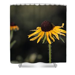Rudbeckia Hirta Shower Curtain