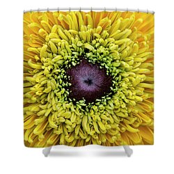 Shower Curtain featuring the photograph Rudbeckia Hirta Maya by Tim Gainey
