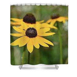 Shower Curtain featuring the photograph Rudbeckiea Hirta  by Lyle Crump