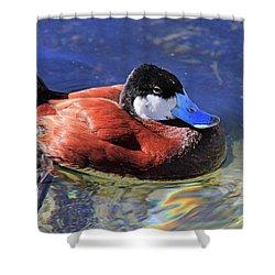 Ruddy Duck 2 Shower Curtain