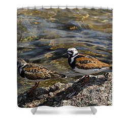 Ruddy Turnstone Shower Curtain by Dan Hefle