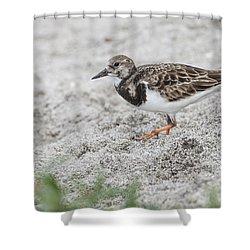 Ruddy Turnstone Foraging On The Beach Shower Curtain