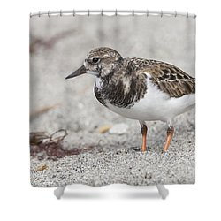 Ruddy Turnstone On The Beach Shower Curtain
