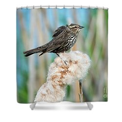 Ruffled Feathers Shower Curtain by Mike Dawson