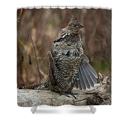 Ruffled Grouse Drumming Shower Curtain by Gary Langley