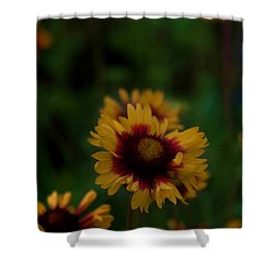 Ruffled Up Shower Curtain by Cherie Duran