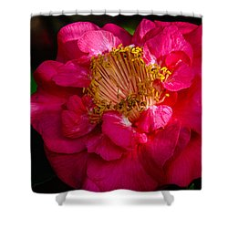 Shower Curtain featuring the photograph Ruffles Of Pink  by John Harding