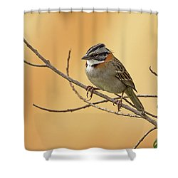 Rufous-collared Sparrow Shower Curtain