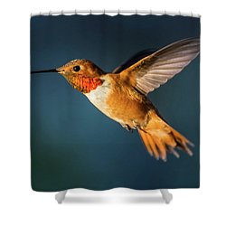 Rufous Shower Curtain