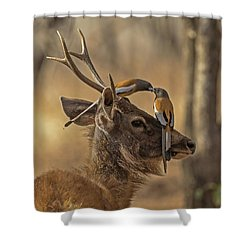 Rufous Treepies Shower Curtain