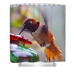Rufus Hummingbird At The Feeder Shower Curtain
