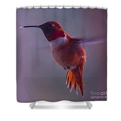 Rufus Hummingbird Shower Curtain