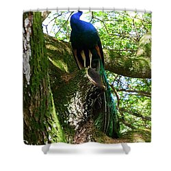 Ruler Of The Roost Shower Curtain by Mary Deal