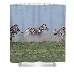Running Zebras Shower Curtain