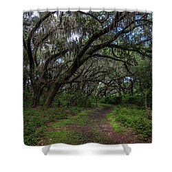 Runnymede Live Oaks Shower Curtain