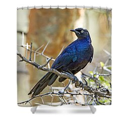 Shower Curtain featuring the photograph Ruppels Glossy Starling by Pravine Chester