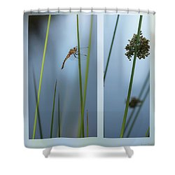 Rushes And Dragonfly Shower Curtain