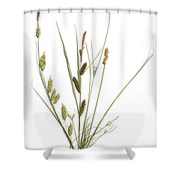 Rushes And Sedges Shower Curtain