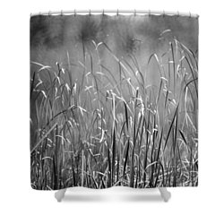 Rushes Shower Curtain