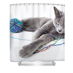 Russian Blue Shower Curtain by Nailia Schwarz