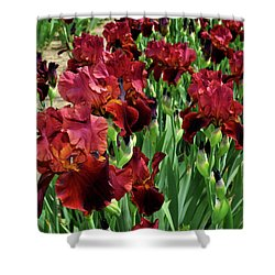 Rust Iris Shower Curtain by Diane Lent